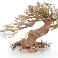 amtra bonsai