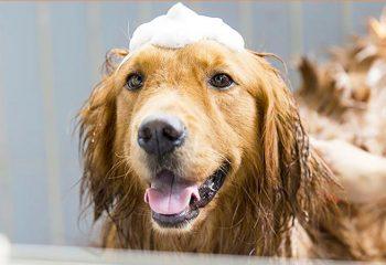 dogbath top dog