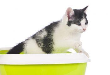 γάτα στη λεκάνη της