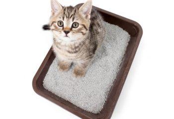 cat litter donts blog1